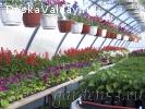 Рассада цветочных и овощных культур