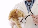 Стационарное лечение и гостиница для животных